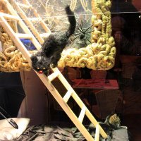 2 кошки...найдите настоящую;-)) :: Olga