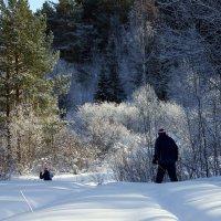Красота зимнего леса. :: Наталья