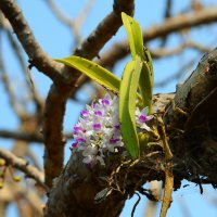 Дикая орхидея :: Юрий Белоусов