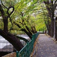 Старые деревья. :: Andrad59 -----