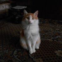Кот на ковре :: Tarka