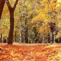 Солнечным октябрьским деньком :: Татьяна Ломтева