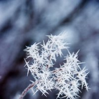 Зимние звёзды :: dmitriy-vdv