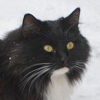 Монастырская. :: Oleg4618 Шутченко