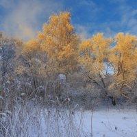 Весенний свет :: Владимир Колесников