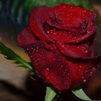 С Днём Святого Валентина! :: zoja