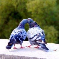 В день влюбленных! :: Лара ***