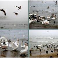 Море, птицы, туман... :: Нина Бутко