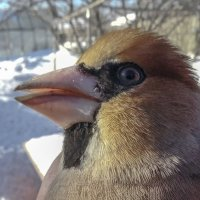 Птичий портрет :: Геннадий Г.