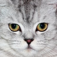 Мама- кошка :: Dr. Olver  ( ОлегЪ )