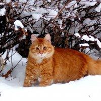 Рыжик : охота на воробьев :: Александр Прокудин