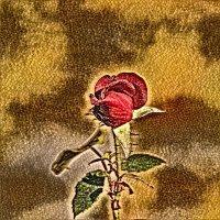 Цветы для влюблённых.. :: Ирина Сивовол