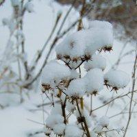 Под снежным одеялом 3 :: Мария Букина