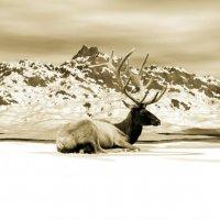 ***Северный олень*** :: Юлия Z