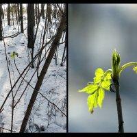 Предчувствие весны -15°С :: Наталья Киселёва