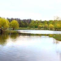 Бабаевский пруд :: Andrei Antipin
