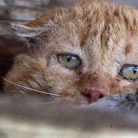Кот который поёт басом...)) :: Владимир Хиль