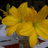 Жёлтые ... :: Алёна Савина