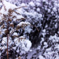 Зима Зимушка Зима :: Niki_ Nik