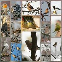 Птицы залетающие в наш сад!!! :: Светлана Масленникова