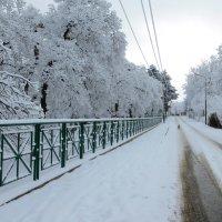 Зима в Коджори :: Наталья (D.Nat@lia) Джикидзе (Берёзина)