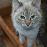 Кошка Мила :: Дарья Логвинова