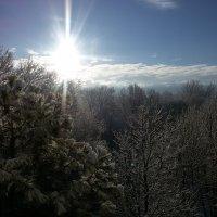 Снежное февральское утро :: Виктория Попова