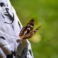 бабочка на мне.. :: Лилия .