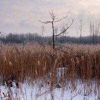 зимнее болото :: Александр Прокудин