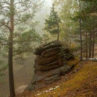 В туманном лесу :: Сергей Герасимов