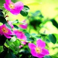 краски лета :: Арина Овчинникова