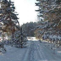 Всё ощутимее дыхание весны... :: Лесо-Вед (Баранов)