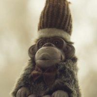 Важная обезьянка :: Сергей