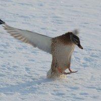 зима притормозила :: StudioRAK Ragozin Alexey