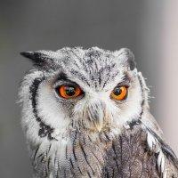 Вот это называется глаза! :: Vitaly Starodubtsev