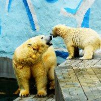 Медведица и медвежонок :: Сергей Царёв