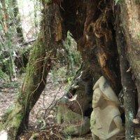 Лесной бог :: чудинова ольга