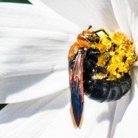 Пчелки трудятся :: Kristina Suvorova