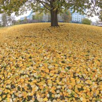 Золотой ковер :: Валерий Кишилов