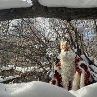 В лесу :: Ирина Крохмаль