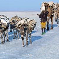Странники пустыни Данакиль :: Евгений Печенин