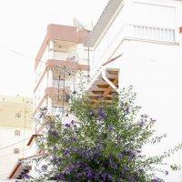 Городские цветы :: Владимир Орлов