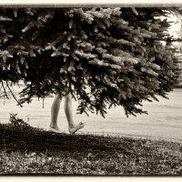волшебный лес. :: Дмитрий Цымбалист