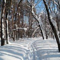 По лесной лыжне :: Андрей Заломленков