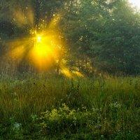 утро..солнце всходит.. :: юрий иванов