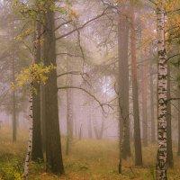 туман в лесу :: Василий И Иваненко