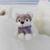 Серый, белый, голубой - все оттенки Зимы. :: Регина Пупач