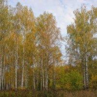 Бархатная осень... :: марк