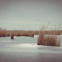 «Камыш во льду» :: Елена