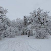 Зима – королева холодных ветров :: Наталья Джикидзе (Берёзина)